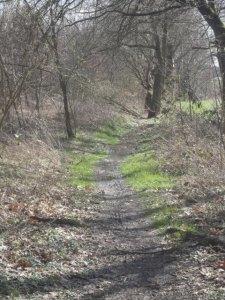 DSC04870 Cross-Trail