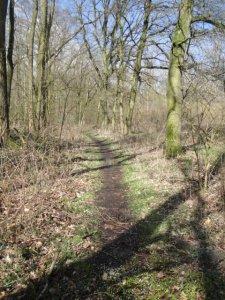 DSC04871 Cross-Trail