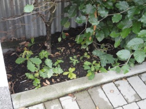 DSC07274 kleine Bäume