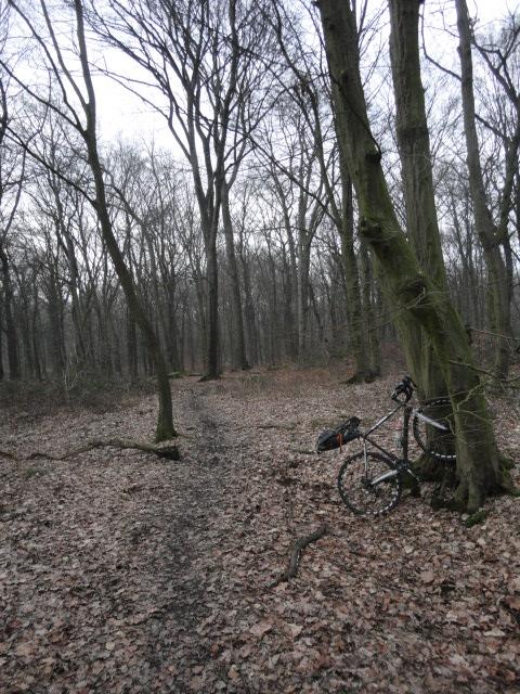 DSC08304 forest.JPG