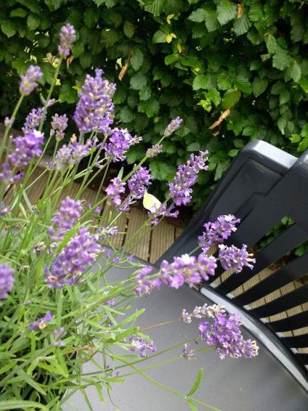 nice-garden_ergebnis.jpg