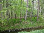 sattwaldgrün_ergebnis