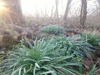 8 nice frosty forest_ergebnis