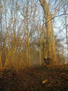 9 forest sun_ergebnis