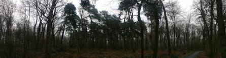 deep forest_ergebnis