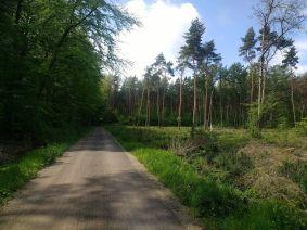 3 nice forest_ergebnis