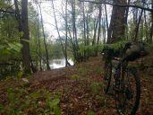 nice forest_ergebnis