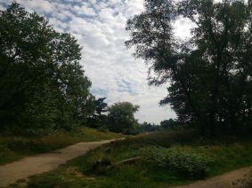 5 landscape_ergebnis